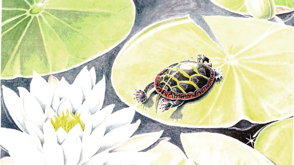 painted turtle lily pad 3