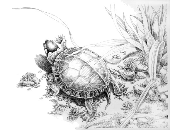 Pen and Ink Drawings by David M. Carroll - The Carroll ...